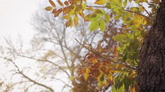 Fall Leaves Rustling and Blowing in the Wind Stock Footage