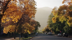 Fall Leaves Rustling and Blowing in the Wind on a Residential Street Stock Footage