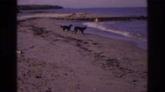 1968: two kids and two dogs have fun at the beach OCEAN CITY NEW JERSEY Stock Footage