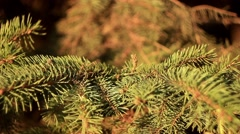 Toy Christmas tree stands Stock Footage