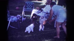 1962: numerous poodles showing off while walking on hind legs BLAINSPORT Stock Footage