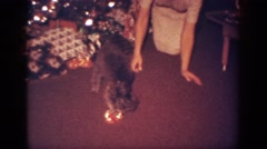 1962: puppy excited to open first present for holiday BLAINSPORT PENNSYLVANIA Stock Footage