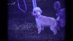 1962: dogs with people playing in a yard BLAINSPORT PENNSYLVANIA Stock Footage