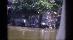 1962: elephants sunbathing and cooling off in a waterfall at a zoo  Stock Footage