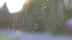 Spider Web Close Up in Breeze, Handheld Stock Footage