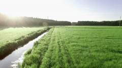 Low altitude dronel shot of a ditch at a light green hay field on early summer Stock Footage
