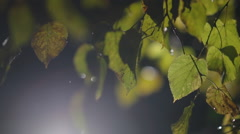 Rain and snow falls on the background of autumn leaves Stock Footage
