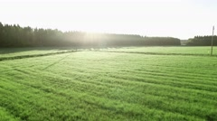 Aerial shot of a ditch at a light green hay field on early summer morning Stock Footage