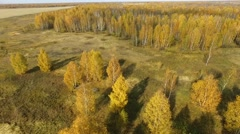 Take-off over the autumn wood Stock Footage