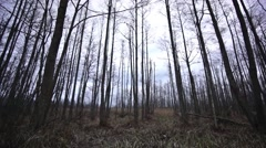Spooky forest in late autumn Stock Footage