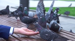 Pigeons eat out of your hand. Stock Footage