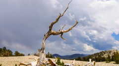 MoCo Timelapse of Cloudscape over Dead Bristlecone Pine Tree -Long Shot- Stock Footage
