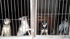 Stray dogs in the shelter in Ukraine Stock Footage