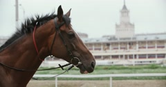 Thoroughbred race horse brown close-up face in the background of a running track Stock Footage
