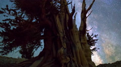 MoCo Astro Timelapse of Milky Way & Giant Bristlecone Pine Tree -Long Shot- Stock Footage