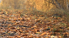 Autumn Leaf Fall Forest in the Mountains on a Sunny Day Stock Footage