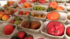 Colorful rare old tomato varieties, tomato exhibition Stock Footage
