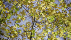Dolly, trees in the forest during a sunny day Stock Footage
