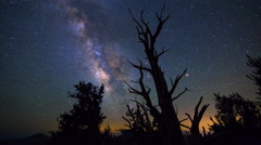 Astro Timelapse of Milky Way over Dead Tree Silhouette  Stock Footage