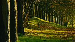 Afternoon sunset in greater London with trees along the road Stock Footage