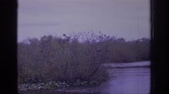1972: a gloomy afternoon at the marsh spent watching two black and white birds Stock Footage