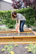 Woman  working in a garden watering seedlings in a bed Stock Photos