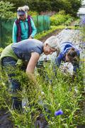 Three mature women working in the flowerbeds in an organic flower garden Stock Photos
