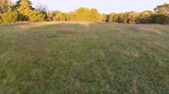 Aerial of a hunting dog in a grassy field Stock Footage