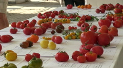 Many rare and old varieties of tomatoes at the table Stock Footage