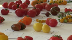 Zoom out of rare and colorful tomatoes Stock Footage