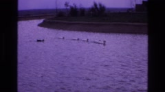 1973: a duck and five swans swimming in a lake. NEW MEXICO Stock Footage
