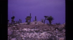 1973: dry rocky land cactus growing small plants  Stock Footage