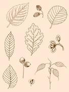 Set of vintage leaves Stock Illustration