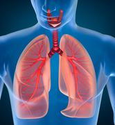 Anatomy of human respiratory system Stock Illustration