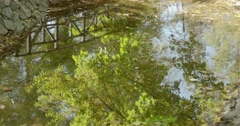 Reflection in water of golden leaves on trees and wooden bridge Stock Footage