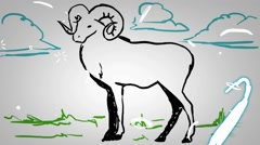 Male Sheep  - Hand Drawn - Animation - outline - White Background - HD Stock Footage