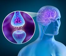 Human brain and Active receptor Stock Illustration