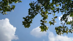 Branches swinging in the wind Stock Footage