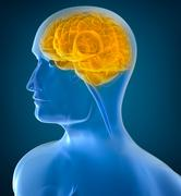 Human brain x-ray view Stock Illustration