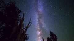 Astro Timelapse of Milky Way & Giant Bristlecone Pine Tree -Tilt Down- Stock Footage