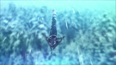 The arrow flies through the snow. Stock Footage