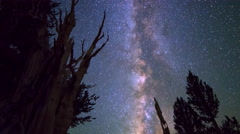 Astro Timelapse of Milky Way & Giant Bristlecone Pine Tree -Zoom Out- Stock Footage