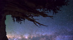 Astro Timelapse of Milky Way & Giant Bristlecone Pine Tree -Vertical/Pan- Stock Footage