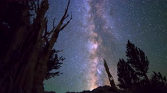 Astro Timelapse of Milky Way & Giant Bristlecone Pine Tree -Long Crop- Stock Footage