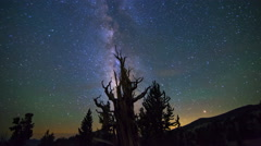 Astro Timelapse of Milky Way & Bristlecone Pine Tree Silhouette  Stock Footage