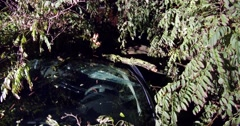 Car crushed by fallen tree after tornado and storm hit area Stock Footage