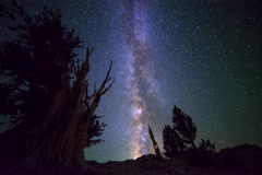6K Astro Timelapse of Milky Way & Giant Bristlecone Pine Tree  Stock Footage