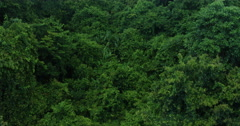 Aerial of beautiful green tree tops in dense forest Stock Footage