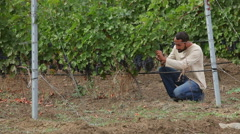 Grower harvesting the wine grapes Stock Footage