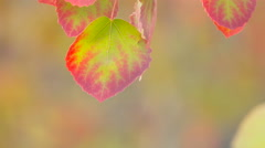 Autumn leaves. Autumn. Close-Up  Leaves. Yellow and red leaves and sunlight. Stock Footage